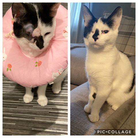 Cat before and after eye operation at Yorkshire Cat Rescue