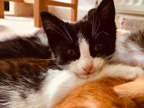 Black and white kitten at Yorkshire Cat Rescue