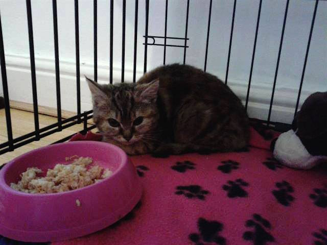 Taming a feral kitten at Yorkshire Cat Rescue