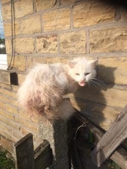 Poorly white stray cat at Yorkshire Cat Rescue