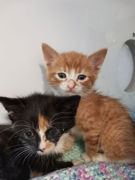 Poorly kittens at Yorkshire Cat Rescue