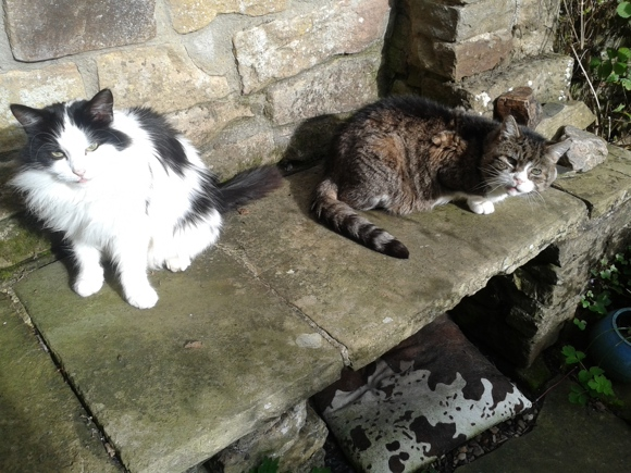 Igor and his cat sister out in Yorkshire Cat Rescue