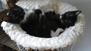 Black and white kittens at Yorkshire Cat Rescue