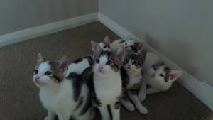 A litter of big kittens at Yorkshire Cat  Rescue