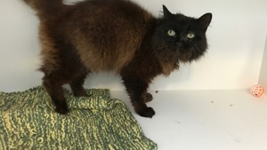 Sick cat Fluffy at Yorkshire Cat Rescue