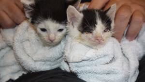 Two kittens rescued