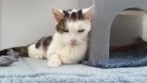 Harvey the cat needs a home at Yorkshire Cat Rescue