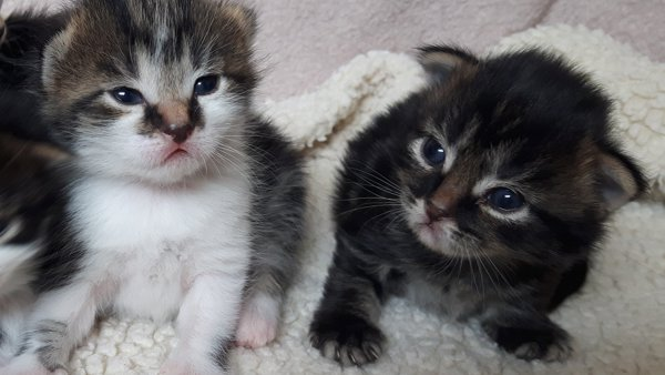 Homeless kittens in Yorkshire