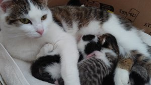 Mummy cat with kittens at Yorkshire Cat Rescue