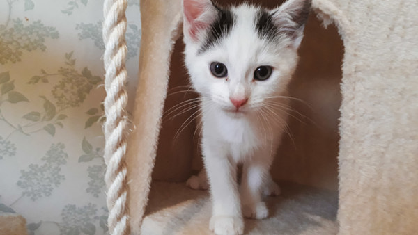 Kitten rescued from Dewsbury Moor estate
