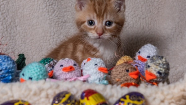 Ginger kitten with Easter eggs at Yorkshire Cat Rescue