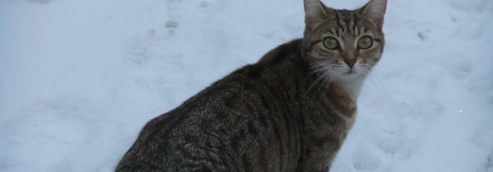 Cat in snow at Yorkshire Cat Rescue