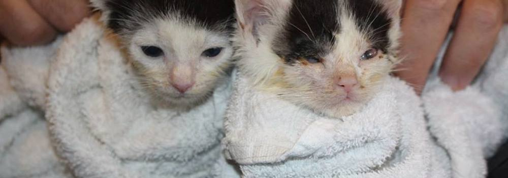 Two kittens rescued at Yorkshire Cat Rescue