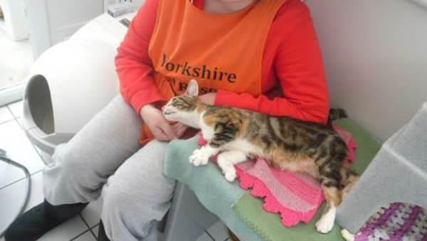 Socialising cats at Yorkshire Cat Rescue