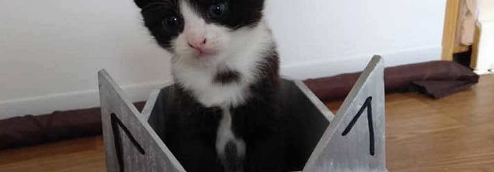 Kitten in plane at Yorkshire Cat Rescue