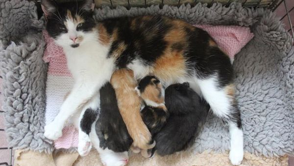 Torti cat and kittens at Yorkshire Cat Rescue