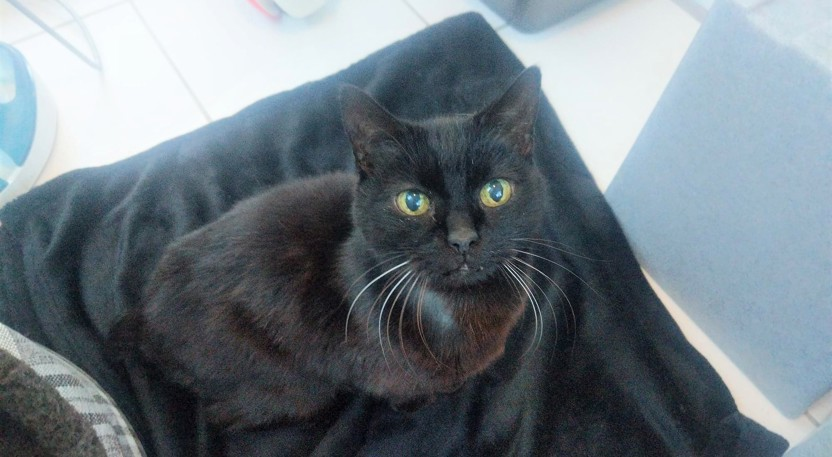 Black cat at Yorkshire Cat Rescue
