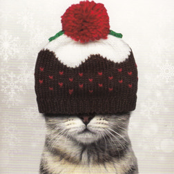 Christmas Card from Yorkshire Cat Rescue -  Cat wearing a hat