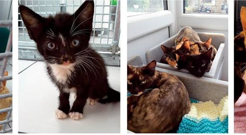 Ringworm cats at Yorkshire Cat Rescue