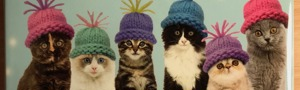 Kittens in Hats Yorkshire Cat Rescue Christmas Cards