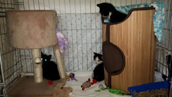 Kittens rescued at Yorkshire Cat Rescue