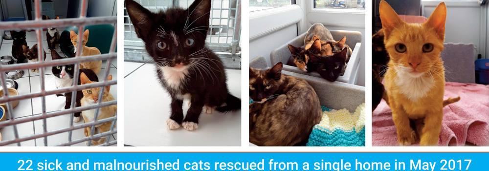 Cats suffering from ringworm at Yorkshire Cat Rescue