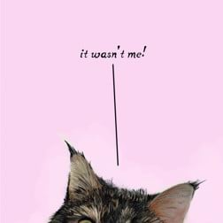 Because Cats - card at Yorkshire Cat Rescue naughty tabby denying all knowledge