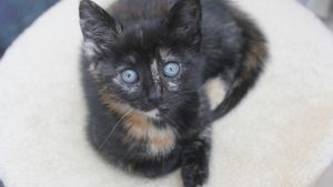 Black kitten at Yorkshire Cat Rescue