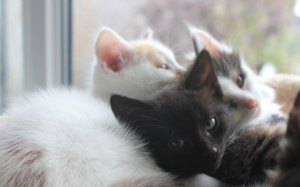 Two kittens at Yorkshire Cat Rescue