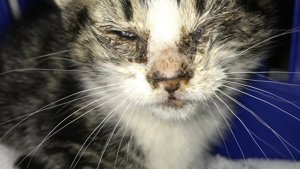 Kitten with cat flu at Yorkshire Cat Rescue