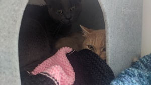 Scared cats at Yorkshire Cat Rescue