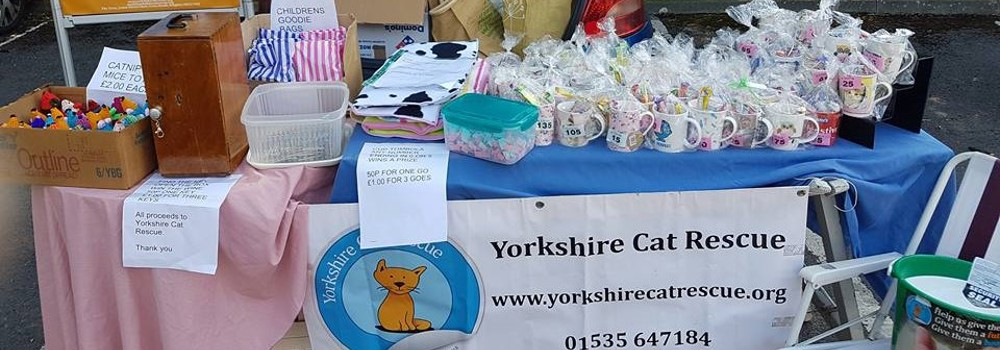 Fundraising for Yorkshire Cat Rescue