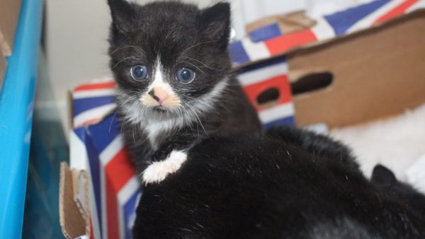 Kitten found in a skip Yorkshire Cat Rescue