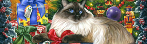 Christmas Card from Yorkshire Cat Rescue - Cream cat on coloured background
