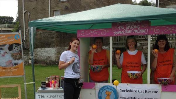 Fundraising at Yorkshire Cat Rescue