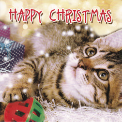 Christmas Card from Yorkshire Cat Rescue - tabby cat and toy ball
