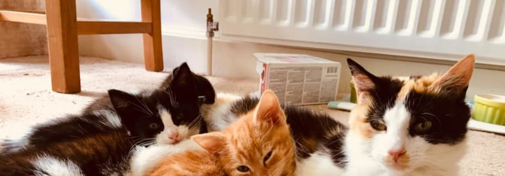 A cat and kittens at Yorkshire Cat Rescue