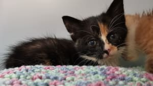 Poorly kitten at Yorkshire Cat Rescue
