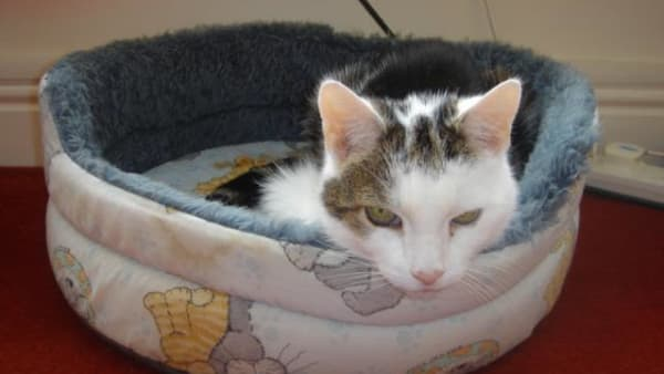 Cat in a soft basket at Yorkshire Cat Rescue