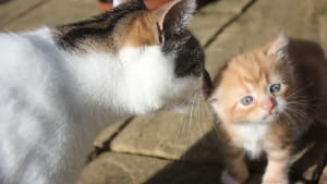 Cat and kitten enjoying the sun at Yorkshire Cat Rescue