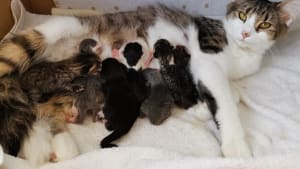 Cat and kittens from Yorkshire Cat Rescue